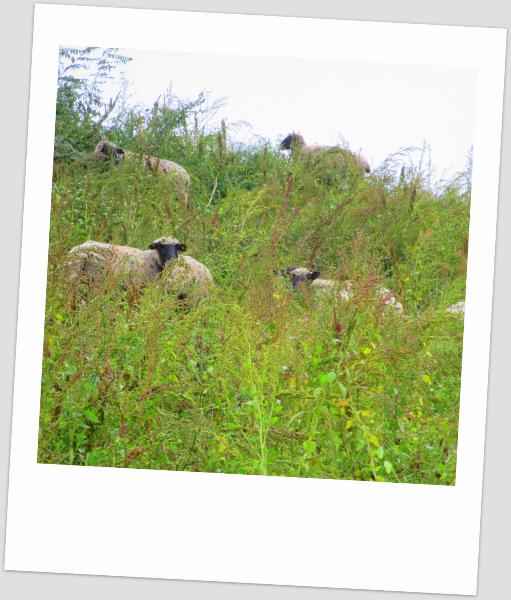 9-sheep-trick-on-tip